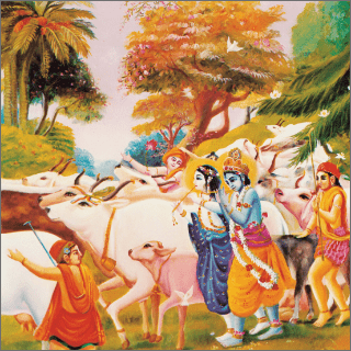 Krsna brought forward the cows and played on His flute through the forest of vrndavana.