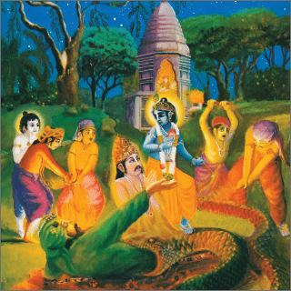 Krsna appeared on the scene and touched the serpent with His lotus feet.