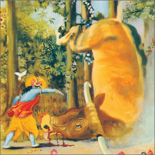 Being kicked by Krsna, AriHasura rolled over and began to move his legs violently.
